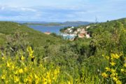 Udsigt over buskads og havneby