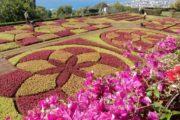 Flotte symmetriske mønstre i Funchal botaniske have