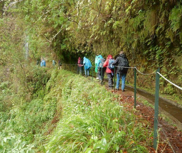 Vandring i regnskoven på Madeira