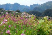 Udsigt med blomster, landsby og bjergtoppe på Madeira