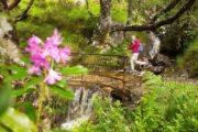 Vandrer på vej over stenbro med jerngelænder over fossende å