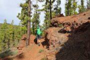 Vandring mellem fyrretræer i rødt vulkanlandskab og