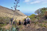 Vandrere på vej gennem tørt landskab med vissen agave