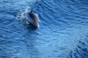 Måske er du heldig og se delfiner