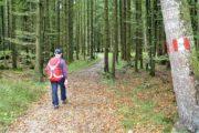 Vandring gennem skoven ned mod Wolfgangssee