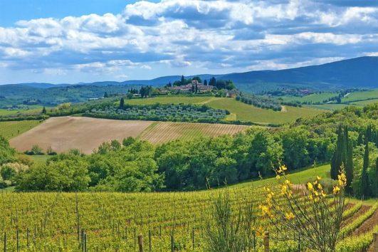 Vandreferie i bakket landskab med vinmarker i Toscana