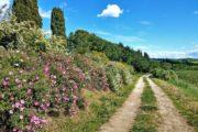 Vandreferie i Toscana ad flad markvej
