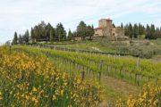 Vandreferie i Toscana kommer forbi vingårde