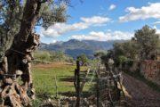 Landlig sti langs stenmur i Mallorcas landskab