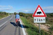 Cyklist og advarselsskilt mod vildsvin