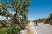 Cykelferie på trafikfri vej