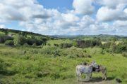 Vandreferie i Irlands ad Wicklow Way