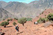 Goldt landskab i Atlasbjergene. Vandringen fortsættes nedad efter passet Tizi Oudite
