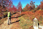 Vandring i efterårsfarver