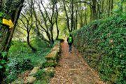 Vandring i den grønne lund