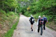 Nem vandring ad grusvej gennem den grønne skov