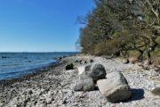 Stranden nedenfor Havbakkerne i Hestehave Skov
