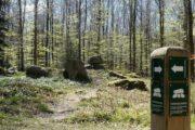 Stendysse i Ringelmose Skov Nationalpark Mols Bjerge