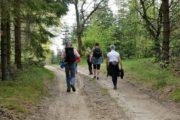 Vandring ad sandede skovveje
