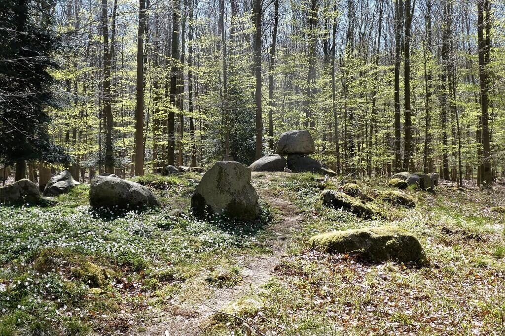 5000 år gammel stendysse i Ringelmose Skov