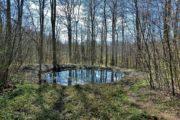 Den hellige Tobias Kilde i Ringelmose Skov