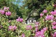 Ørnbjerg Mølle bag rhododendron
