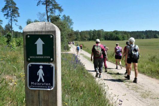 Nem vandring ad grusvej på Mols Bjerge Stien