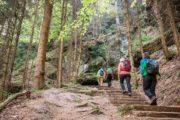 Vandreferie i Sachsiske Schweiz trapper i skoven
