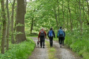 Vandring gennem skov på Mols Hoved