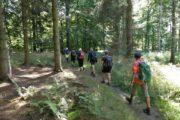 Vandring gennem Ringelmose Skov