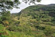 Udsigten fra Levada do Canical til landbrugsland med terrasser